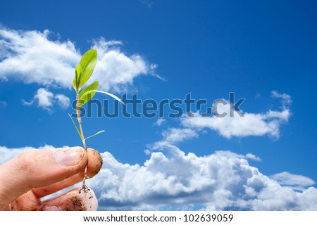 Fingers holding a freshly plucked sprout against a blue sky - stock photo