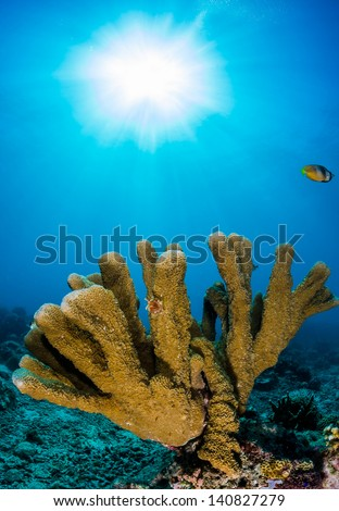 Fingers of hard coral reach toward the surface in blue water with a sun burst behind on a tropical reef - stock photo