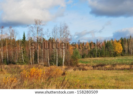 Finland. Golden autumn in the forest in october