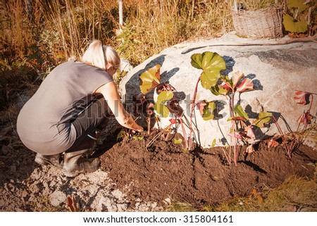 Finnish blonde woman doing garden work in Finland in autumn. Image includes a Autumn effect. - stock photo