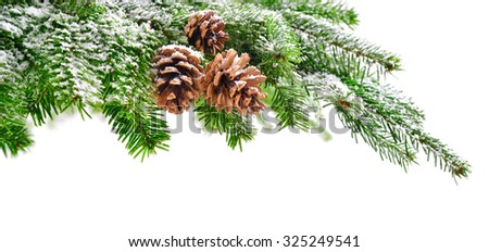 Fir branch and cones in fresh green, lightly covered in snow, with pure white copyspace background - stock photo
