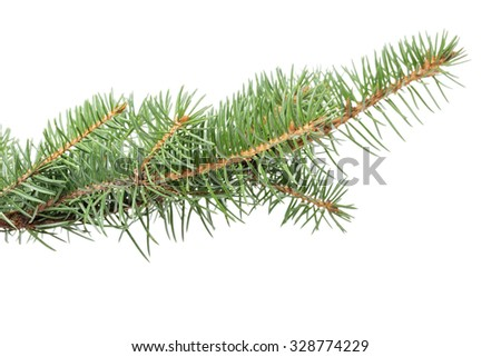 fir branch for christmas ornament isolated on white - stock photo