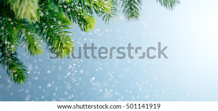 Fir branch in snow,Copy space for your text