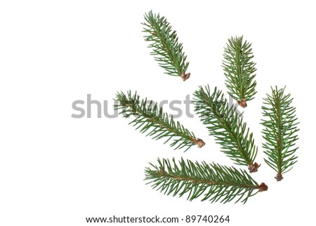 fir branch isolated on white background - stock photo