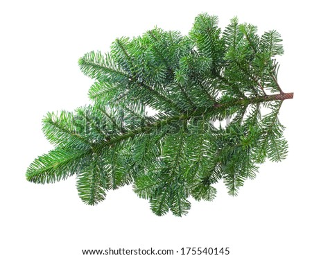 Fir branch on a white background - stock photo