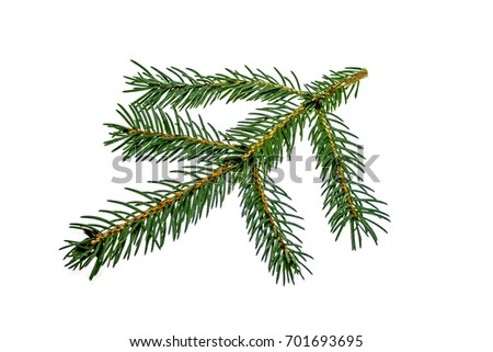 Fir branch on white background