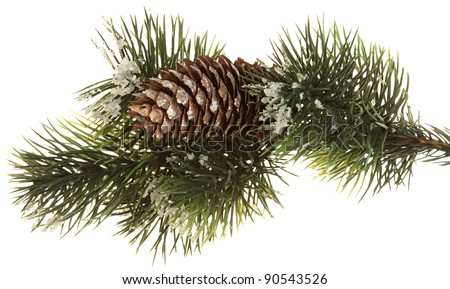 Fir branch with fir cones  isolated on white - stock photo