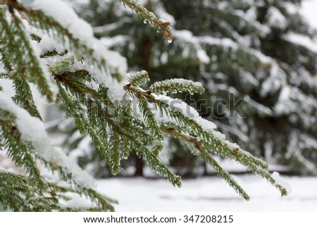 Fir Branch With Pine Cone And Snow Flakes. Christmas Holidays Background