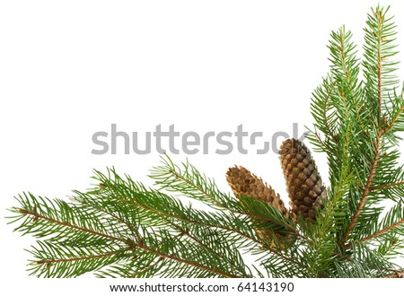 fir branches and cones as frame - stock photo