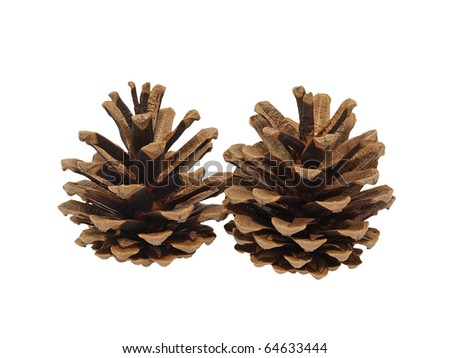 Fir cone on a white background. Isolated.