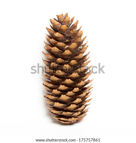 fir-cone on the white isolated background.  - stock photo