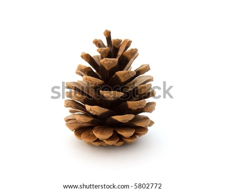 fir cone on white background - stock photo