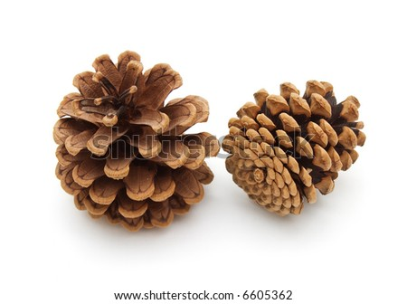 fir cones - stock photo