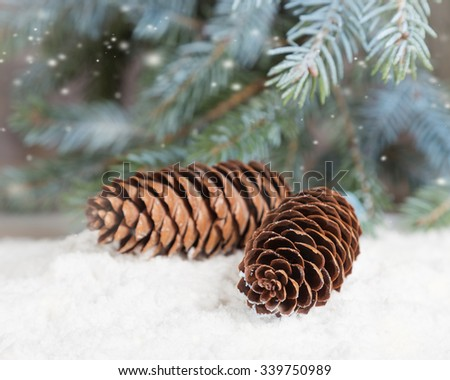 Fir cones lie on snow under fir sprinkled with snow - stock photo