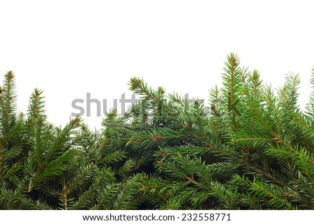 Fir franch border isolated on white background