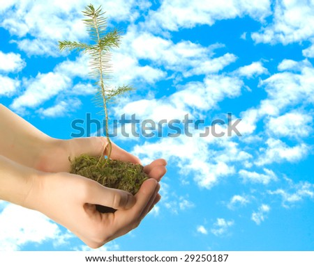 Fir in hands behind beautiful blue sky with clouds