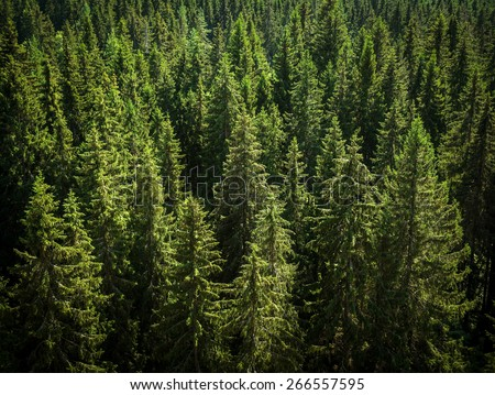 fir peaks shot from above - stock photo
