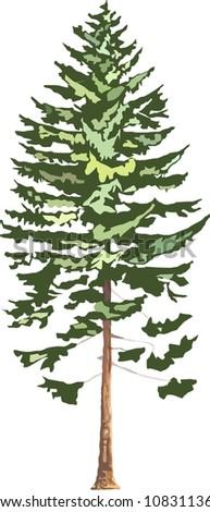 fir tree - stock photo