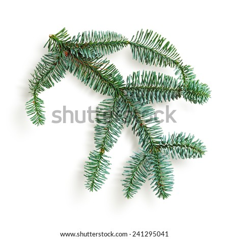 Fir tree branch. Christmas themes. Coniferous blue spruce twig isolated on white background. Object with clipping path - stock photo