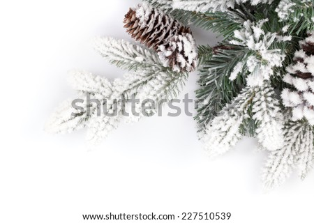 Fir tree branch covered with snow. Isolated on white background - stock photo