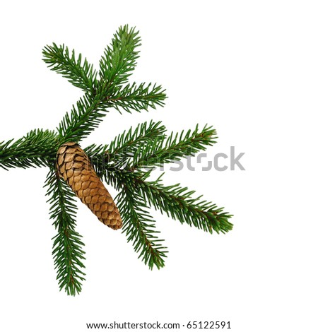 fir tree branch with cone isolated on white - stock photo