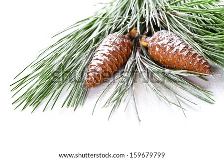 fir tree branch with pinecones closeup on white background - stock photo