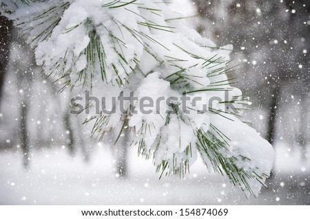 fir tree branch with snow - stock photo