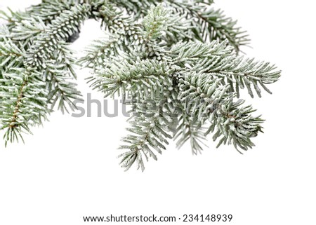 Fir tree branch with snow isolated on a white background - stock photo