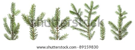 Fir tree branches isolated on white background - stock photo