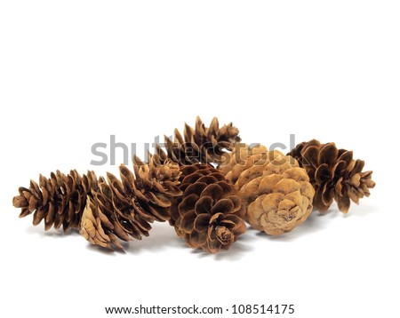 fir tree cones on a white background - stock photo