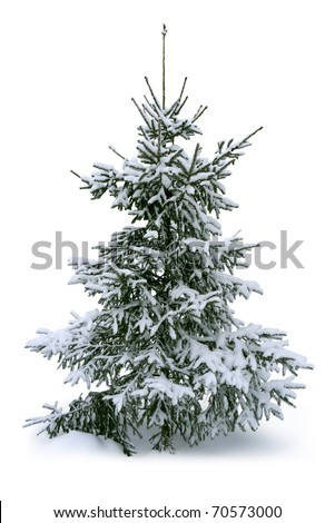 Fir tree covered with snow - stock photo