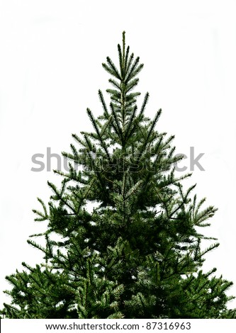 Fir tree for Christmas, not adorned, isolated on white without shadow - stock photo