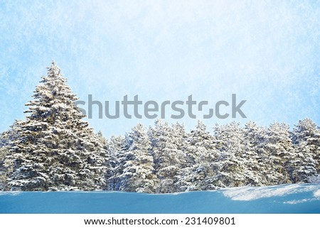Fir tree forest on beauty winter day - stock photo