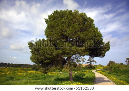 Fir tree in a meadow