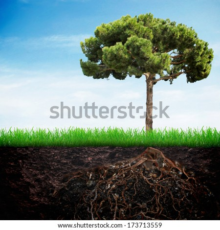 Fir tree in the earth with grass over spring sky background - stock photo