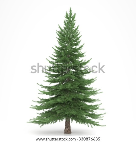 Fir tree isolated - stock photo
