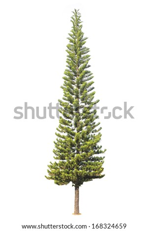 Fir tree isolated on white background. - stock photo