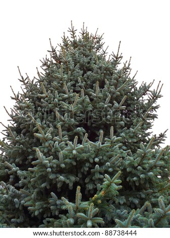 Fir tree isolated on white background - stock photo