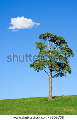 Fir tree on field against a blue sky with one cloud above