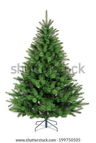 Fir tree on white background - stock photo