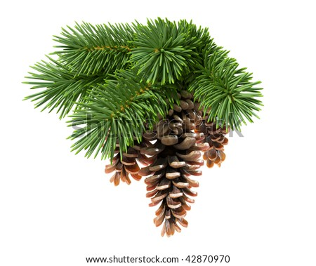 Fir tree with pine-cones isolated on white background - stock photo