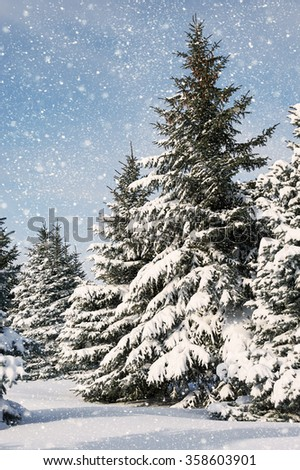 fir trees covered by snow, winter landscape - stock photo