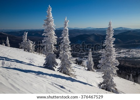 Fir trees in the snow on the mountain top