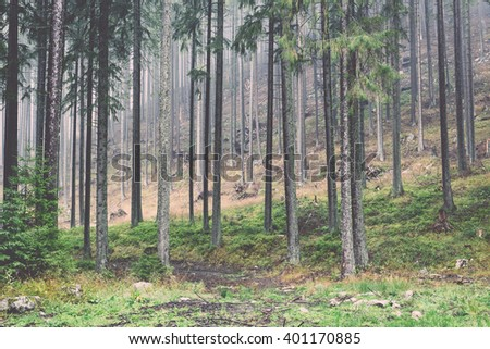 fir trees on a meadow down the will to coniferous forest in foggy forest in latvia - vintage film effect - stock photo
