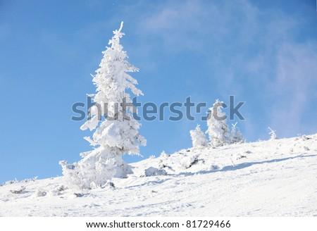 Fir trees on mountain slope near piste - stock photo