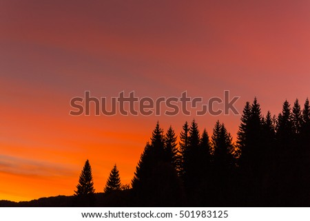Fir trees profiled on intense sunrise in the mountains in winter