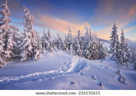 Fir trees under the snow. Mountain forest in winter. Christmas landscape. The path in the snow. Carpathian mountains, Ukraine, Europe - stock photo