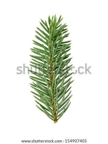 fir twig with clipping path - stock photo