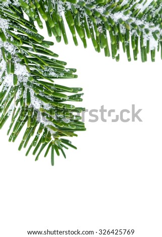 Fir twigs, slightly covered with snow, on white background; Winter greeting card