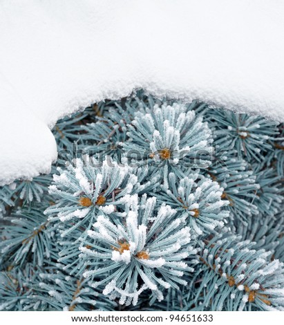 fir with snow - empty space for text - stock photo